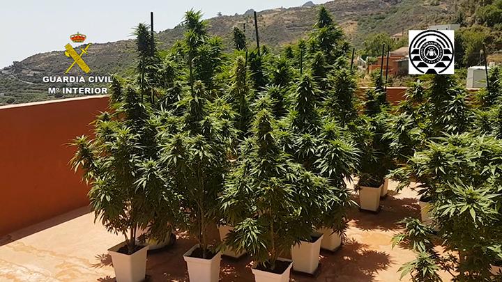 Plantacion Marihuana Las Palmas Editada.00 00 14 17.Imagen fija001