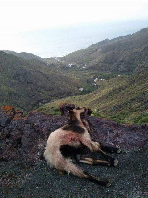 cabras asesinadas cabildo