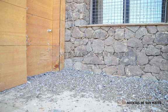 excrementos palomas puertas