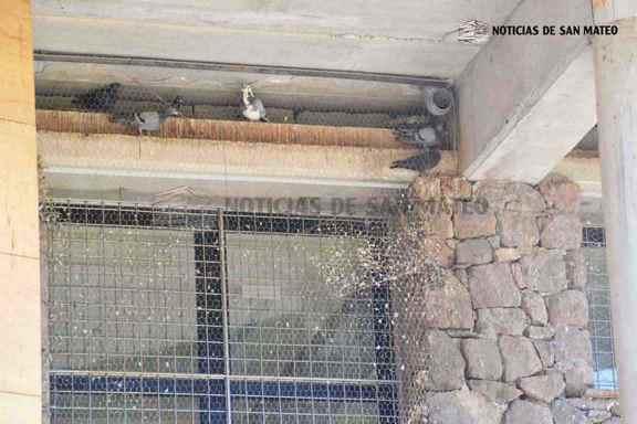 palomas en bodega