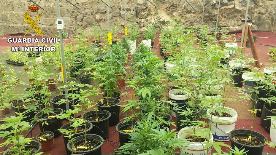 plantacion maria lpgc
