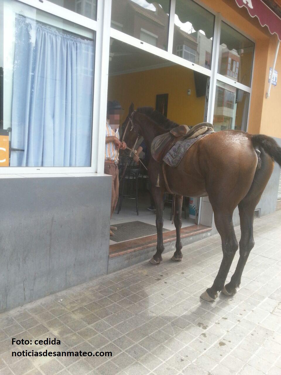 Jinete y caballo avda tinamar