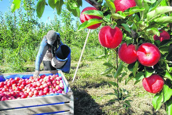curso fruticultura